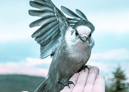 Digital räckvidd – Är en fågel i handen verkligen bättre?
