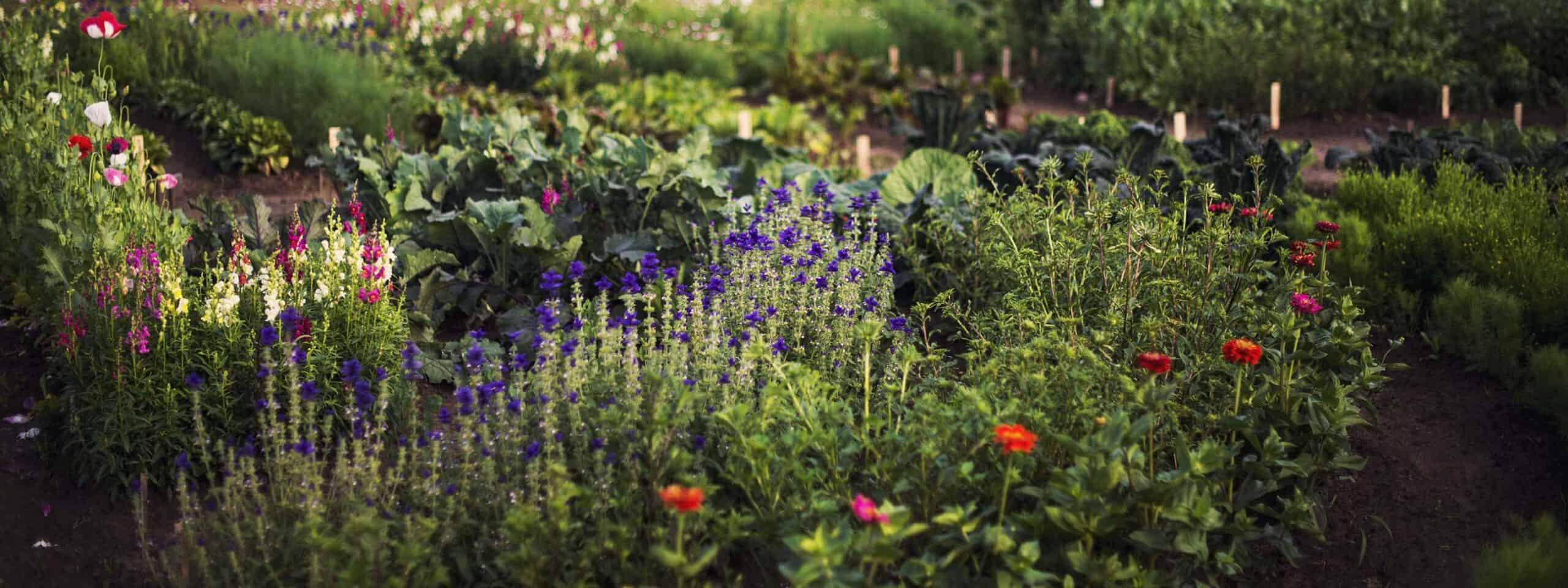 Trädgårdsresan - Nulägesanalys